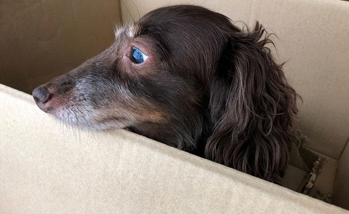 段ボールに入れられた捨て犬